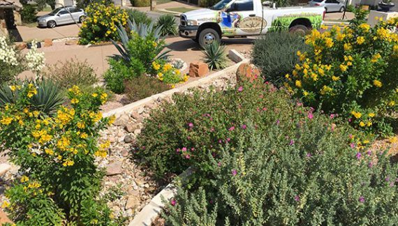 Austin Landscaping, Austin Xeriscaping, Round Rock Landscaping, Round Rock Xeriscaping, Cedar Park Landscaping, Cedar Park Xeriscaping, Georgetown Landscaping, Georgetown Xeriscaping